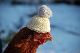 chickenhat1
