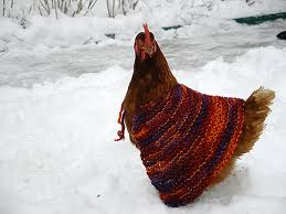 chickensweater1