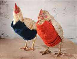 chickensweater3