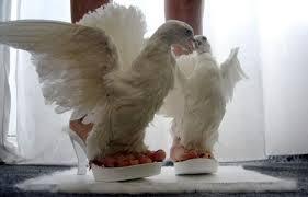 birdshoes