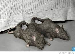 Kin to the mole slippers.....